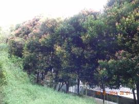 DSCN5918