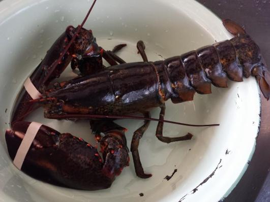 625g live lobster S$39.90/kg=S$24+