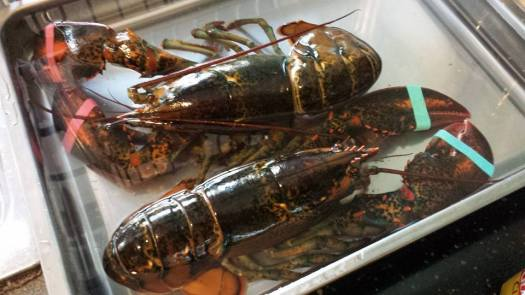 2 live lobsters from sheng shiong