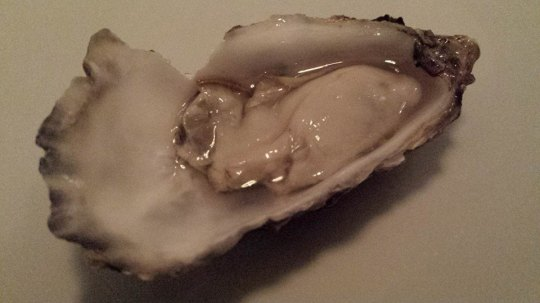 nice oyster
