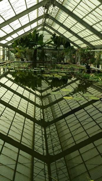 greenhouse - Umi-Jigoku Beppu16