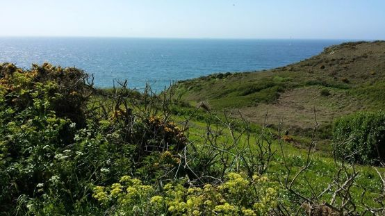 from road leading back to minack theatre