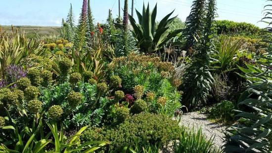 garden alongside minack theatre