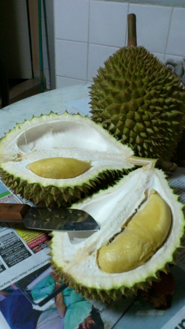 picking durians at pulau ubin - the good ones