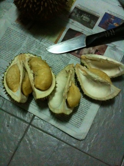 picking durians at pulau ubin - good ones