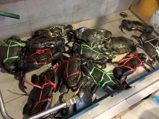 sri lankan crab