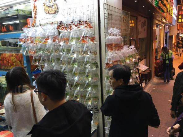 selling ornamental fishes