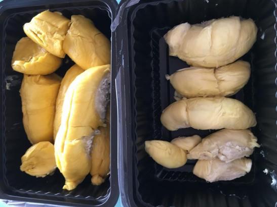MSW + XO durians