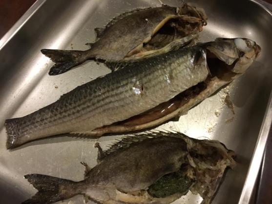 mullet & rabbit fish