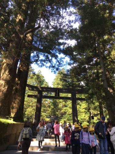 torii-gate-toshogu-shrine