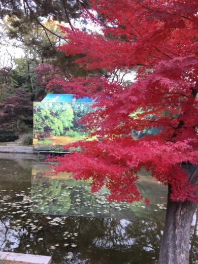 Day 1 - aeryeonji pond, biwon秘苑secret gardens