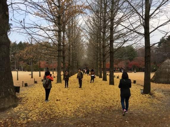 Day2 - autumn colours nami island, chuncheon
