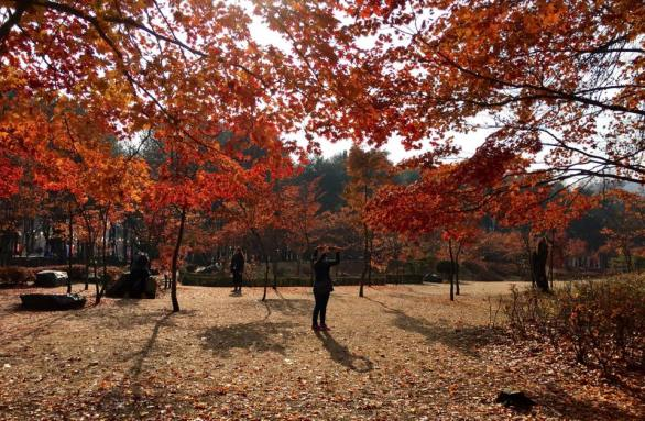 nami Island 남이선 南怡岛