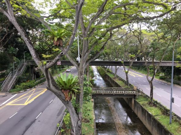 view from rail crossing over bukit timah & dunneran road