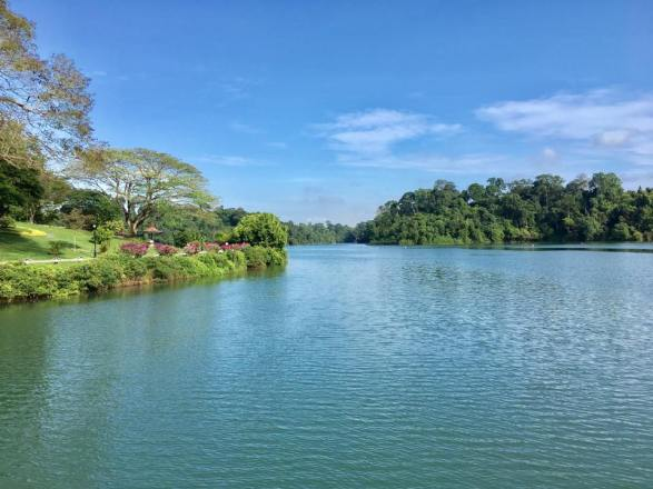 walk at macritchie