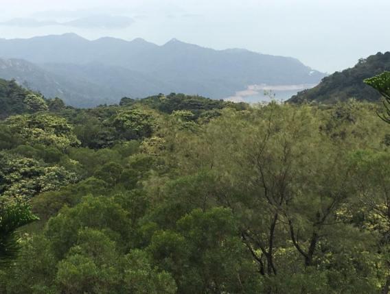 view of shek pik reservoir from big buddha